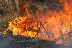 DEC Reminds New Yorkers That Residential Brush Burning is Prohibited Until May 15