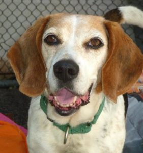 Governor Announces Additional $5 Million Available for Animal Shelter Improvement Projects