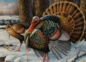 DEC Seeks Landowners to Assist with Wild Turkey Research