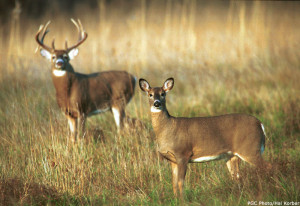 DEC Announces Bowhunting Seasons for Deer and Bear