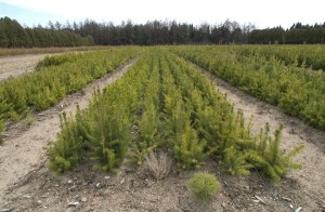 Saratoga Tree Nursery Kicks Off Annual Tree and Shrub Seedling Sale and School Seedling Program  Landowners Can Take Advantage of Low-Cost Native Plants; Available to Schools for Free