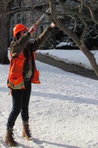Wait Until Next Winter to Prune Your Oak Trees