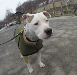 Pets of the Week:  Stand and Callan