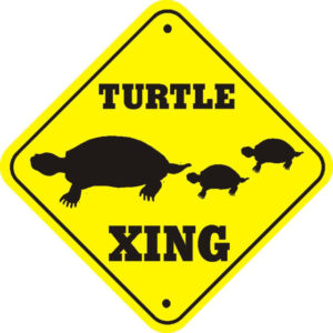 DEC Advises Motorists to Be Alert for Turtles Crossing Roadways
