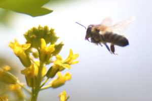 TOWN OF UNION VALE IS FIRST TO PASS A POLLINATOR PROTECTION POLICY IN DUTCHESS COUNTY, NY