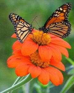 Weekly Gardening Column: National Pollinator Week, From The Berkshire Botanical Garden
