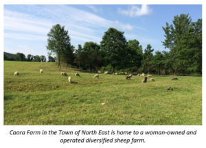 Dutchess County Partners with State, Land Trusts  to Preserve Working Sheep Farm in Town of North East