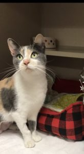 Pets of The Week: Captain and Gemma