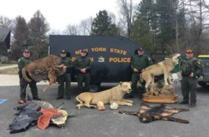 DEC Environmental Conservation Police Officer Highlights – ECO Actions for Late March