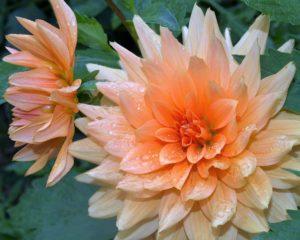 Be-a-Better-Gardener: Another Season of Bulbs