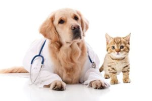 Dutchess County Announces Rabies Clinic May 26th