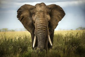 DEC and Columbia County DA Charge Four Hudson Antique Dealers With Illegal Ivory Sales