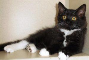 Pets of The Week: Flower, Kittens