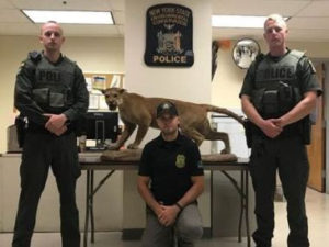 DEC Environmental Conservation Police Officer Highlights, ECO Actions for Early to Mid-June