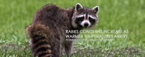Warmer Weather Brings Increased Risk for Rabies