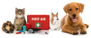 MRC of Dutchess Presents First Aid for Pets Program on August 9th