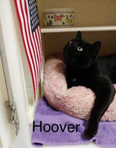Pets of The Week: Sally, Hoover