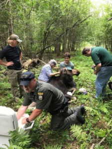 DEC Environmental Conservation Police Officer Highlights, ECO Actions for Early August