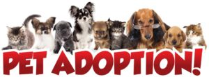 Amenia Tractor Supply Hosting Animal Adoptions, Pet Supplies Drive Aug. 25 for Out Here With Animals Event