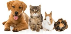 Governor Signs Legislation to Protect Pets