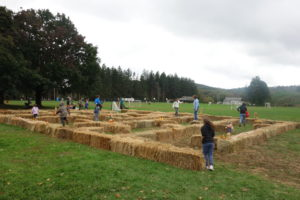 Pawling Fall Fest Photos