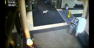 A persistent pup finds owner at a hospital