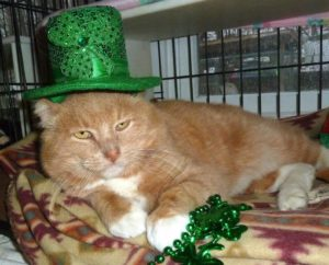 Pet of The Week: Big Red