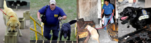 Arson Awareness Week: Accelerant Detection Canines – Sniffing Out Arson