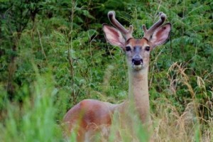 Remaining Deer Management Permits Available for Hunters