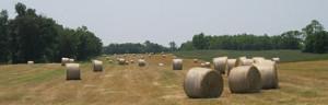 $20 Million Hudson Valley Farmland Protection Program Announced