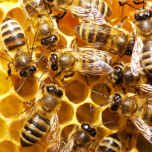9% Increase in New York Honey Production in 2015