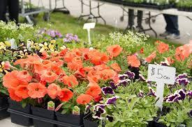 Plant & Garden Sale