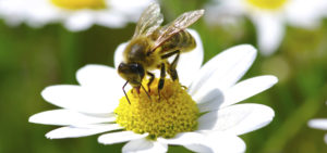 Recommendations From New York State Pollinator Task Force