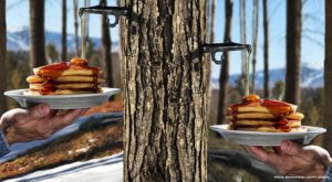 Maple Syrup Production in New York Increases Nearly 18 Percent