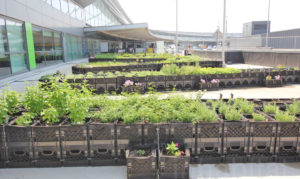 Inside the world's first airport potato farm at JFK