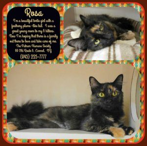 Pet of The Week: Rosa