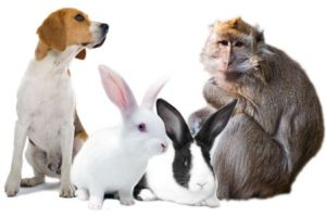 Governor Signs Legislation Requiring Research Animals to be Offered for Adoption in New York