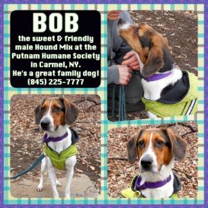 Pet of The Week: Bob