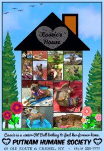 Pet of the Week: Cassie