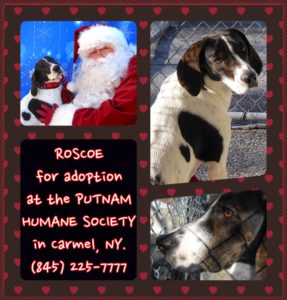 Pet of The Week Roscoe