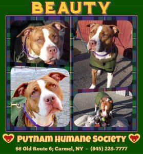 Pet of The Week:  Beauty