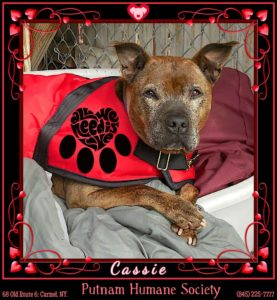 Pet of The Week: Cassie