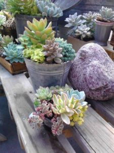 SUCCULENT WORKSHOP @ Parrino's Greenhouse
