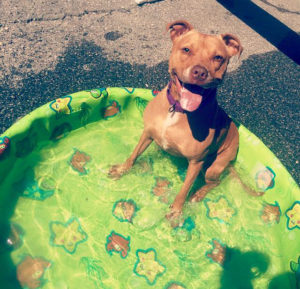 Pets of The Week: Sally & Carney