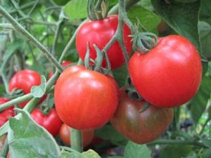 """Be-a-Better Gardener"" Tomatoes for the Northeast by The Berkshire Botanical Garden"
