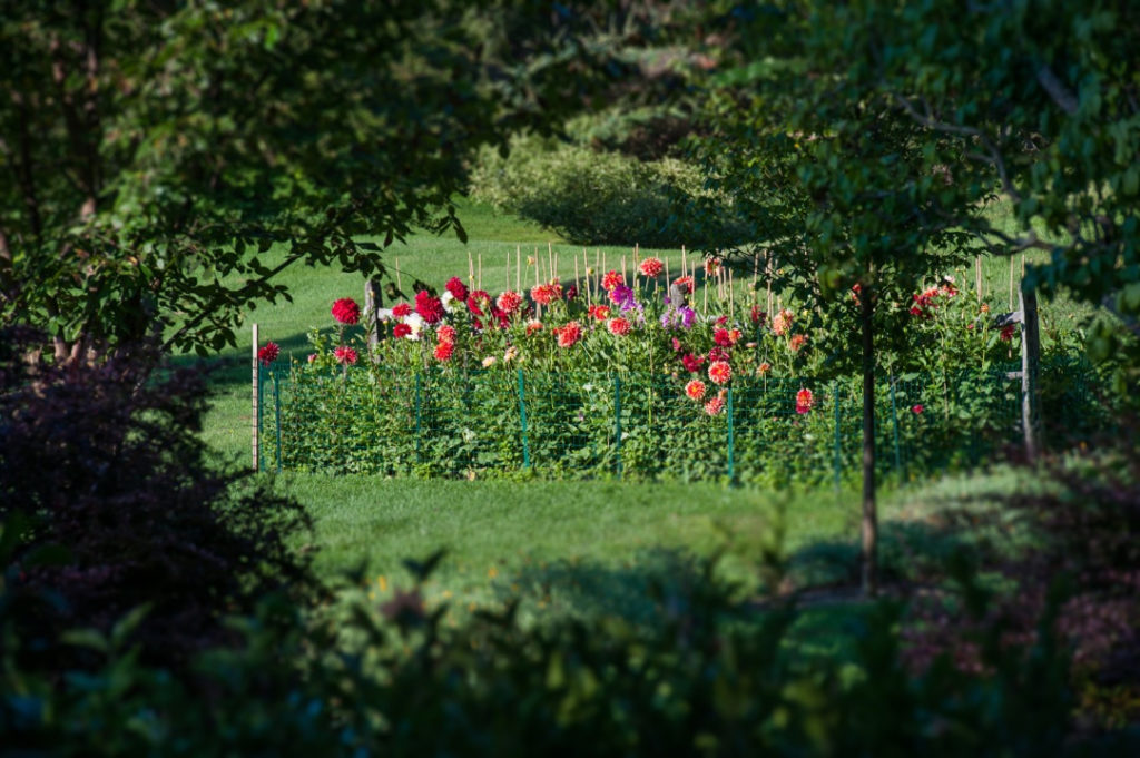 Dutchess county open day on september 23rd features garden tours a plant sale and a family for Garden conservancy open days 2017