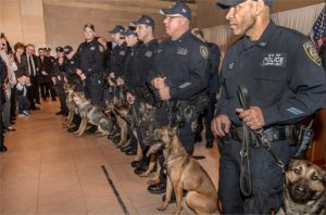 Thirteen Canines Graduate from MTA Police Department's Explosive Detection Training Course in Stormville