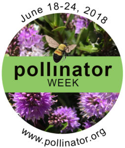 National Pollinator Week is a time to celebrate pollinators and spread the word about what you can do to protect them