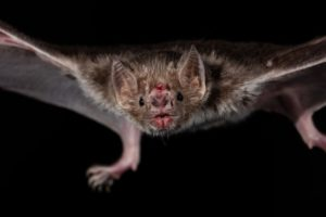 County Advises Residents to Be Careful of Bats