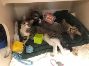 Pets of The Week: Garrison and Kittens